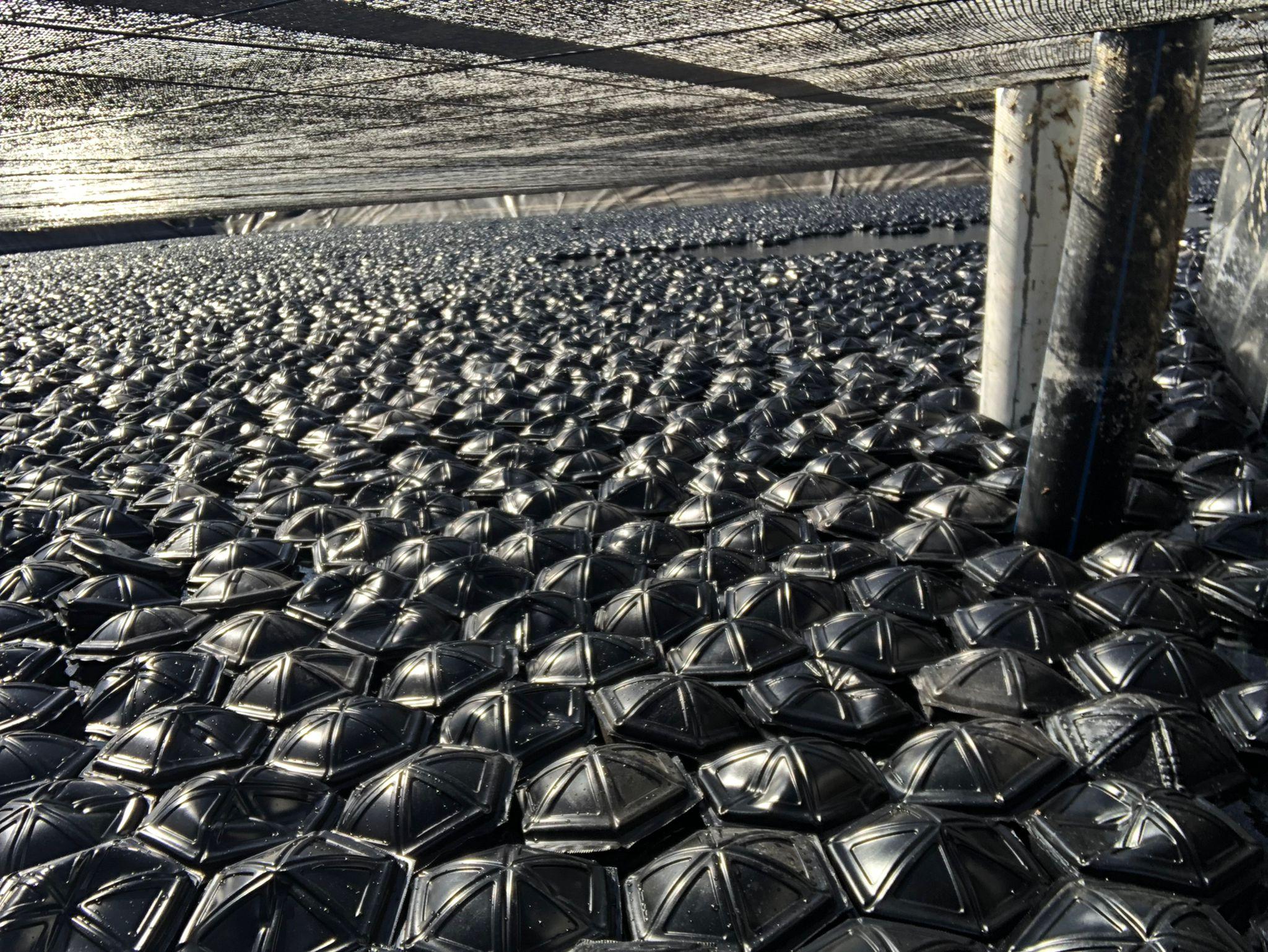 eliminación de microalgas en balsa de riego